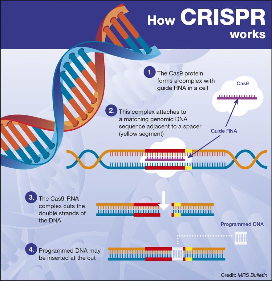 Chart on How CRISPR works
